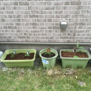 家庭菜園1