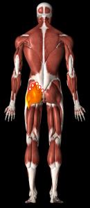 大臀筋治療部位