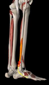 短腓骨筋トリガーポイント