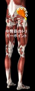 中臀筋のトリガーポイント
