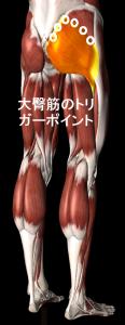 大臀筋のトリガーポイント