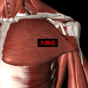 肩関節の筋肉3