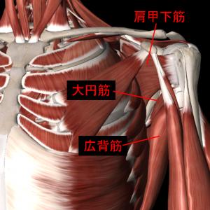 肩関節の筋肉2